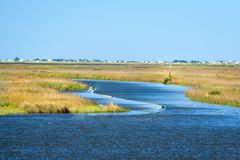 Louisiana-Sumpfgebiete lizenzfreie stockbilder