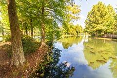 Louisiana-sumpfiger Flussarm lizenzfreie stockbilder