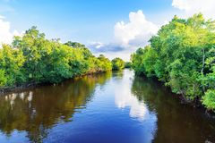 Louisiana-sumpfiger Flussarm Lizenzfreies Stockbild