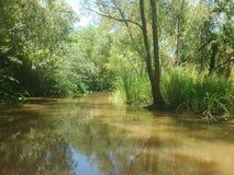 Louisiana Swamp stock photography