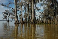 Louisiana Swamp Royalty Free Stock Photo