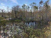 Louisiana Swamp royalty free stock photos