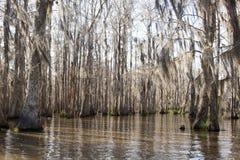 Louisiana Swamp. Swamp near New Orleans in February Royalty Free Stock Photos