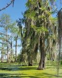 Louisiana swamp tour royalty free stock photos