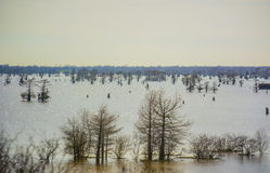 Louisiana Swamps. View of Unique Louisiana Swamps Between Lake Charles and Baton Rouge Louisiana Stock Images