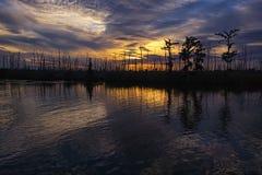 Louisiana träsksolnedgång Arkivbild