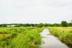 Louisiana våtmarker royaltyfri foto