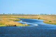 Louisiana våtmarker royaltyfria bilder