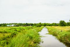 Louisiana Wetlands. Details of marshy wetlands in South Louisiana royalty free stock photo