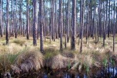 Louisiana Woods Royalty Free Stock Photos