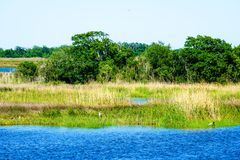 Louisiane Bayou royalty-vrije stock foto's