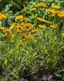 Louisiane Wildflowers royalty-vrije stock fotografie