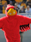 Louisville Cardinals mascot Royalty Free Stock Images