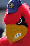 Louisville Cardinals mascot Royalty Free Stock Photo