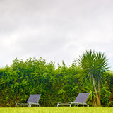 Lounge chairs and palm trees Stock Image