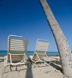 Lounge chairs under Queen palm trees  Royalty Free Stock Photo
