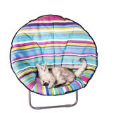 Lounger cat Stock Images