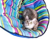 Lounger cat Stock Photos