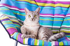 Lounger cat Royalty Free Stock Photography