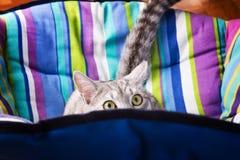 Lounger cat Stock Photo