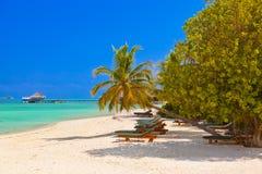Loungers на пляже Мальдивов Стоковая Фотография RF