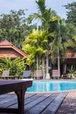 Loungers солнца бассейном с пальмами в тропиках Стоковое Фото