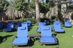 Loungers Солнця на траве под пальмами Стоковое Изображение RF