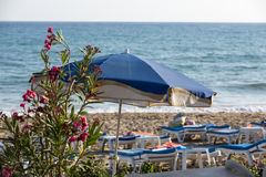 Loungers di Sun sulla spiaggia Fotografia Stock