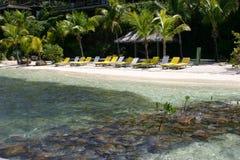 Loungers di Sun sulla spiaggia tropicale immagine stock libera da diritti