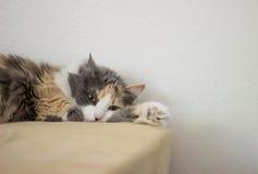 Lounging кота Стоковые Изображения RF