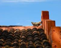 Lounging蜥蜴 免版税库存照片