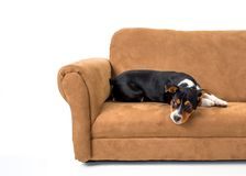 Lounging on the couch puppy Royalty Free Stock Image