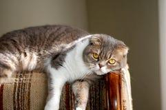 lounging maisie Стоковая Фотография RF