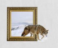 Loup dans le cadre avec l'effet 3d Photos libres de droits