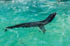 Loup de mer 2 Photos libres de droits