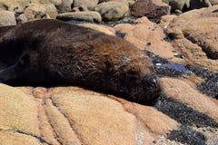Loup de mer 2 Photographie stock libre de droits