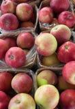 Loup de pommes Photographie stock libre de droits