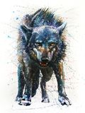 Loup - dernier combat Images libres de droits