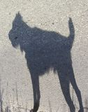 Loup-garou minuscule Photo libre de droits