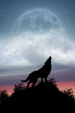 Loup hurlant à la pleine lune photographie stock
