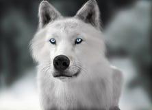 Loup sauvage blanc avec des yeux bleus avec la profondeur brouillée du fond d'hiver de champ Image libre de droits