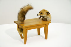 Loup-table Images stock