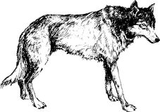 Loup tiré par la main avec la ligne et le marqueur de stylo Photo libre de droits