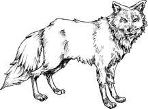 Loup tiré par la main avec la ligne et le marqueur de stylo Image stock