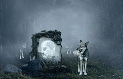 Loups gardant une vieille tombe images stock