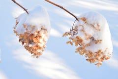 Lourd avec la neige Photo stock