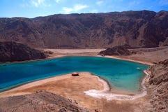 Louro azul coral Egipto Fotografia de Stock