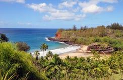 Louro da tartaruga, Kauai, HI Foto de Stock