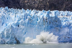 Louro de geleira, Alaska imagem de stock