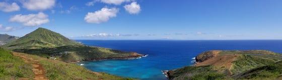 Louro de Hanauma, Havaí foto de stock